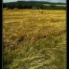 emptyfield