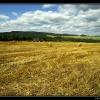 emptyfield2