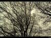 _igp8950-wintertrees