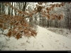 _igp8954-frozenleaves